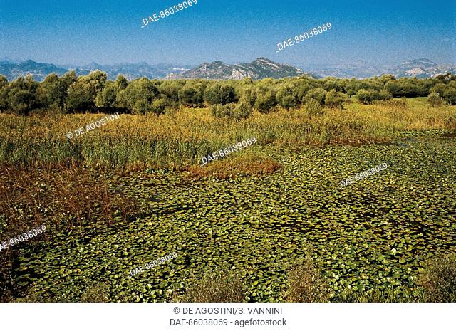 Vegetation near Lake Skadar, Montenegro