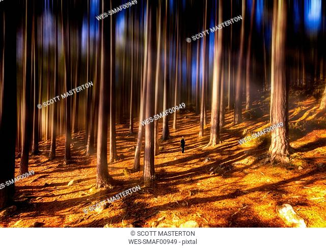 United Kingdom, Scotland, Highlands, Cairngorms National Park, woman in autumn forest