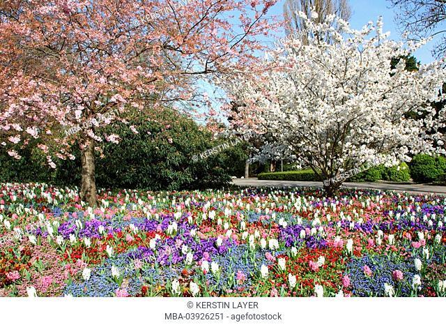 Trees, bloom, spring-flowers, hyacinths, pansies, forget-me-nots