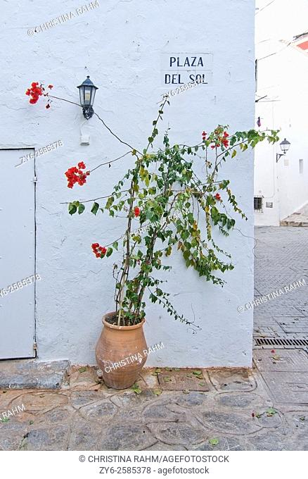 Flowering plant and wall lamp in Eivissa Old Town Dalt Vila in Ibiza, Balearic islands, Spain