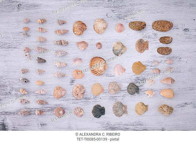 Variety of seashells on white surface
