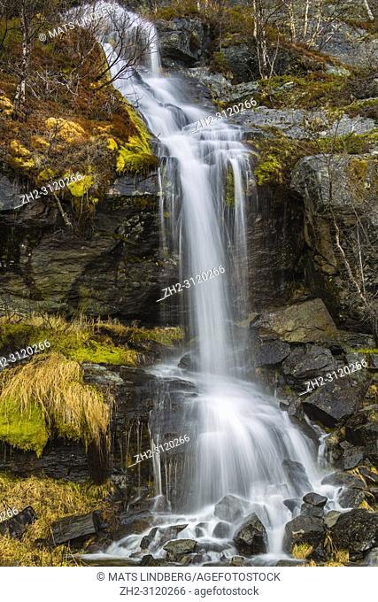 Waterfall in Stora sjöfallets national park in spring season with budding birch trees, Stora sjöfallets national park, Laponia, gällivare county