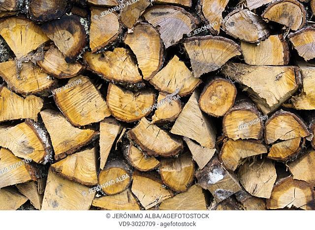 Trunks of cut wood. Saja Natural Park, Saja-Nansa, Cantabria, Spain Europe
