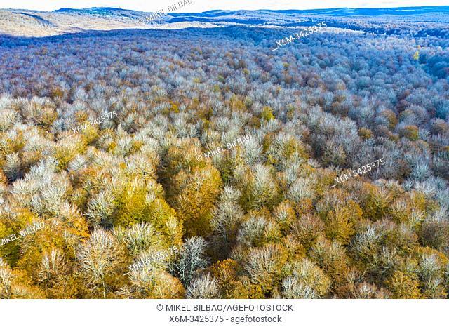 Beechwood. Aerial view. Navarre. Spain, Europe