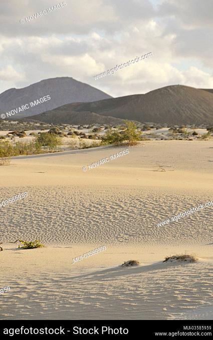 Sand dunes, Corralejo National Park, Fuerteventura, Canary Islands, Spain, Europe