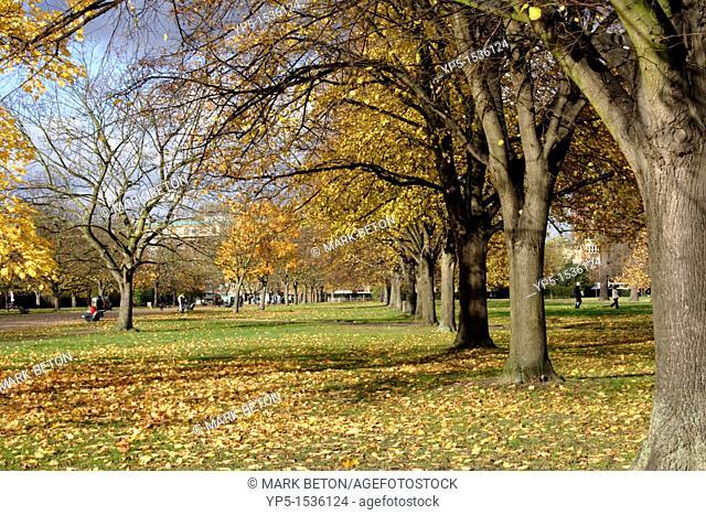 Autumn Trees Kensington Gardens London