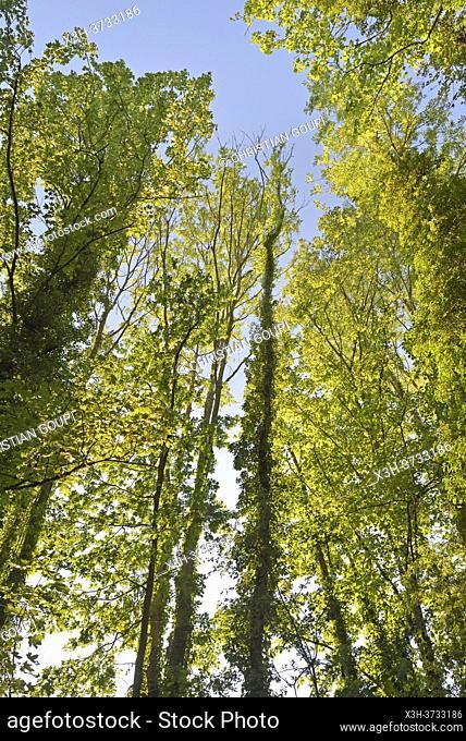 Foliage, Eure-et-Loir department, Centre-Val-de-Loire region, France, Europe