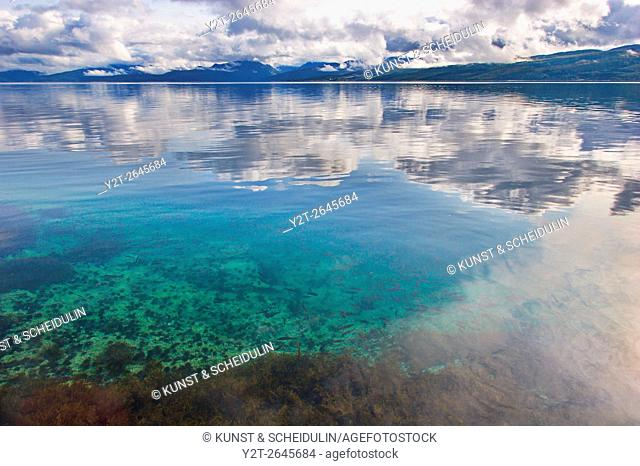 Young fish are swimming in the clear water of Ofotfjorden near Evenes in northern Norway