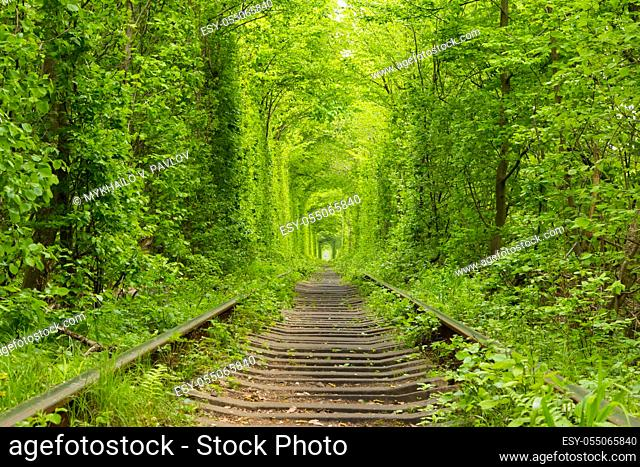 """Ukraine. Spring. Railway in the dense deciduous forest. """"""""Tunnel Of Love"""""""""""