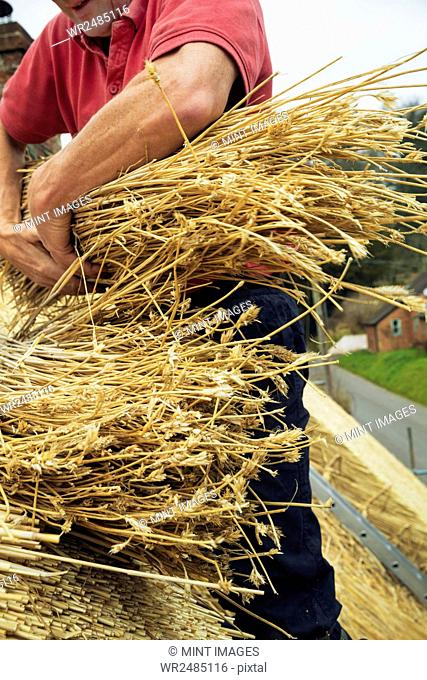Close up of a thatcher on a roof, holding a yelm of straw