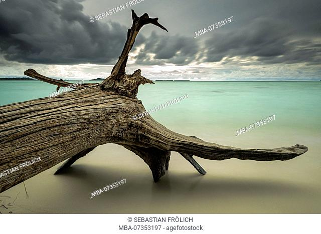 Driftwood on the beach of the Indian Ocean, on the Banyak Islands