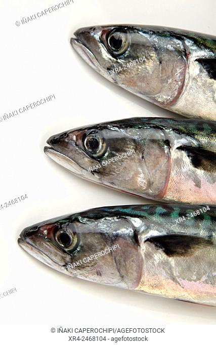 Still life of Mackerels
