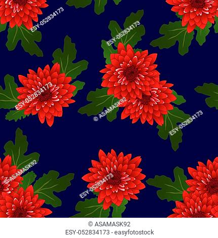 Red Chrysanthemum on Navy Blue Background. Vector Illustration