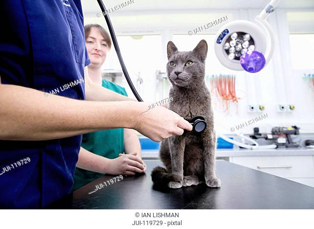 Vet examining pet cat with stethoscope on table in surgery