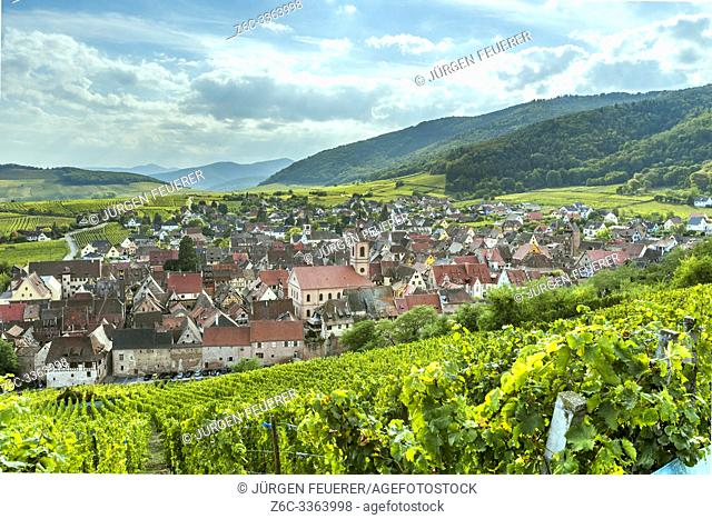 landscape panorama of wine village Riquewihr at the foothills of the Vosges, Alsace, Wine Route, touristy destination between vineyards, France
