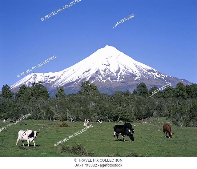 Egmont National Park / Mt.Egmont (Mt.Taranaki), Taranaki, North Island, New Zealand