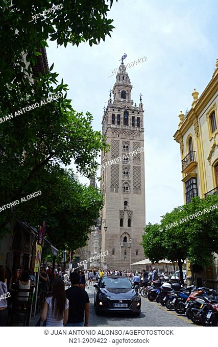 La Giralda in the Santa Cruz Quarter. Seville, Andalucia, Spain, Europe