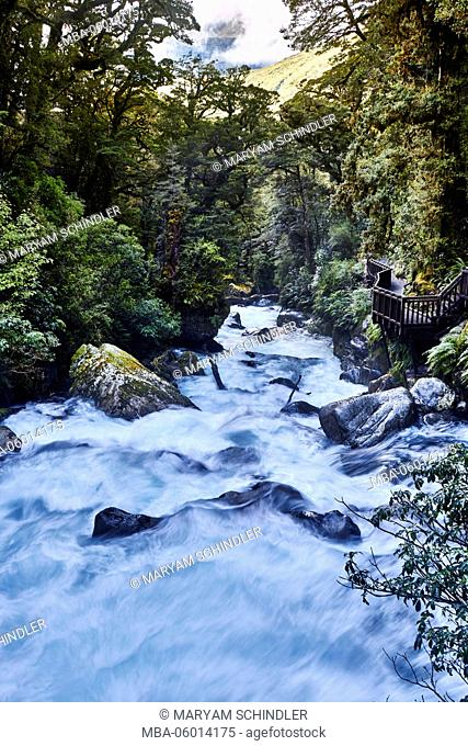 New Zealand, south island, Fiordland, rapid stream, trees, thick wood