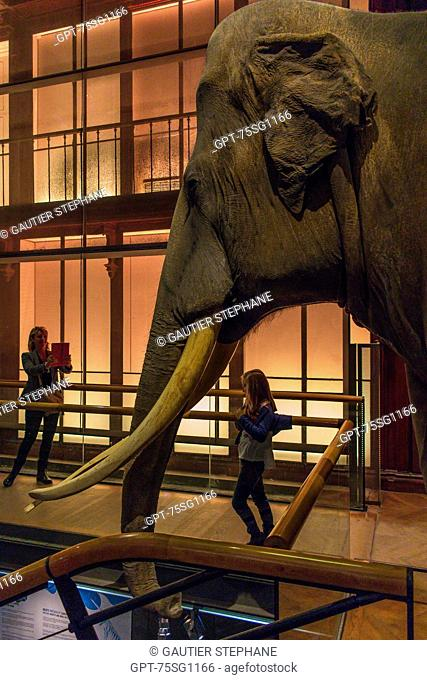 THE GREAT GALLERY OF EVOLUTION, NATIONAL MUSEUM OF NATURAL HISTORY, JARDIN DES PLANTES, 5TH ARRONDISSEMENT, PARIS (75), ILE-DE-FRANCE, FRANCE