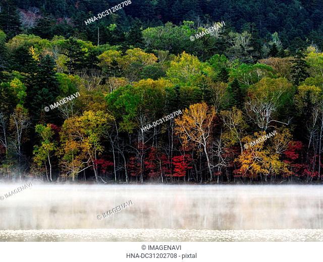 Onneto, autumn foliage