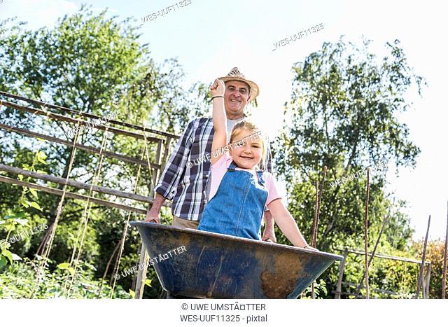 Grandfather pushing wheelbarrow with granddaughter in the garden