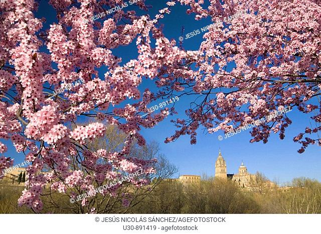 Overview of the cathedrals of Salamanca from the banks of the River Tormes  Salamanca  Castilla y Leon  Spain