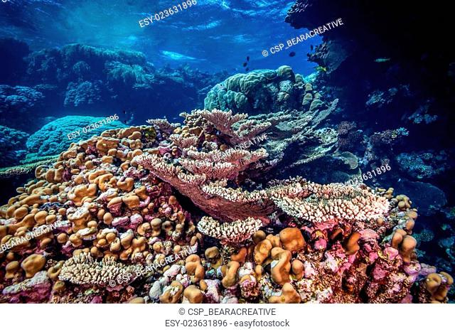 Coral reef scene in the Fury Shoals