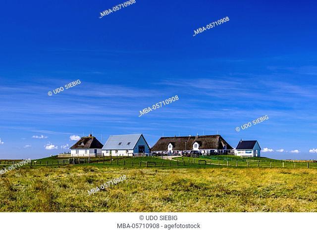 Germany, Schleswig-Holstein, North Frisia, Reußenköge, Hamburger Hallig, salt meadow