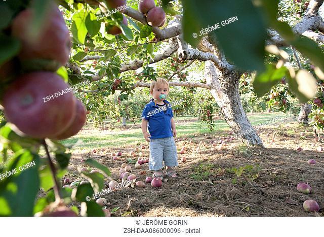 Toddler boy standing under apple tree