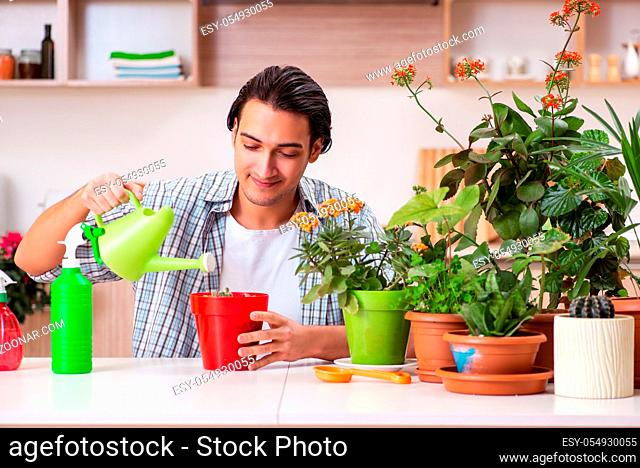 Young handsome man cultivating flowers at home