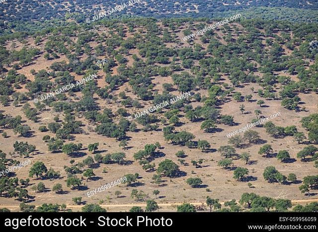 Dehesa aerial view, typical pastoral management states. Sierra de Fuentes, Caceres, Extremadura, Spain