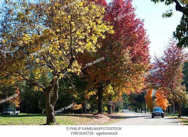 Autumn colours at Harrietville on the Great Alpine Road, Victoria, Australia