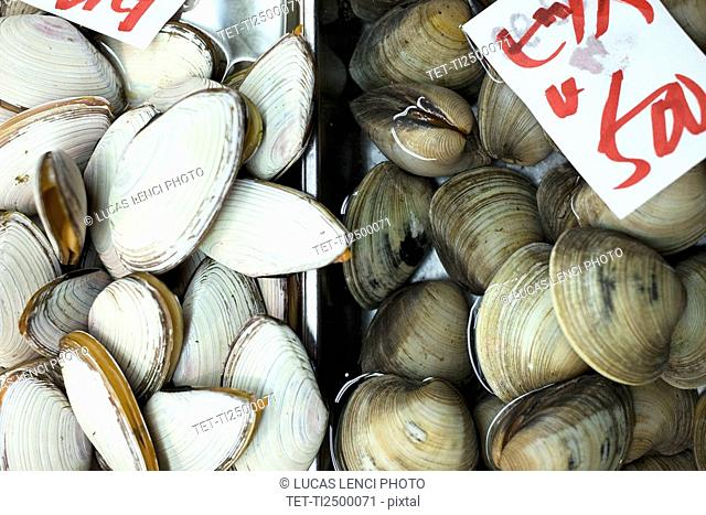 Clams on display in market