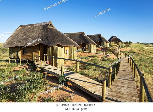 The chalets of of the Rooiputs Lodge. During the rainy season with green surroundings. Kalahari Desert, Kgalagadi Transfrontier Park, Botswana