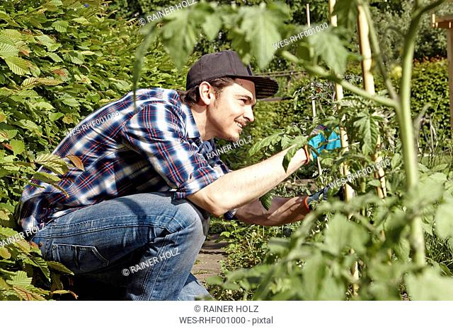 Smiling man working in garden