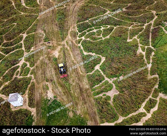 05 October 2020, Bavaria, Utting am Ammersee: A tractor is driving on a cultivated plant field, into which a maze of an oversized picture of the composer Ludwig...