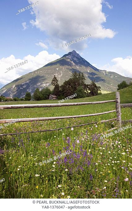 Imst Austria Europe / June Summer Alpine flower meadow in green valley with mountain beyond