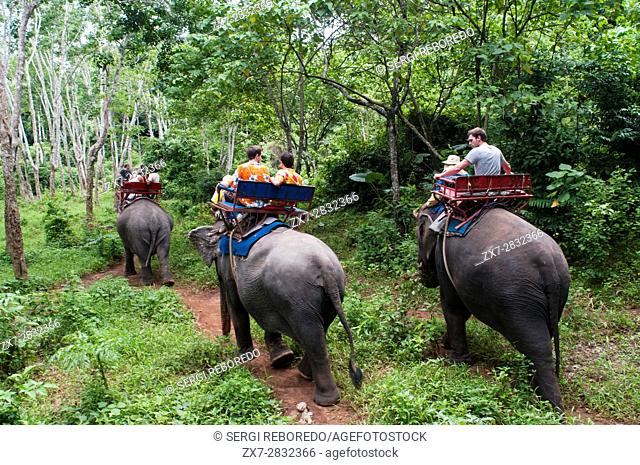 Elephant riding in rubber tree forest. Krabi. Thailand, Asia. Krabi Nature Elephant Trekking & River Camp. The elephant camp is just a 7 km