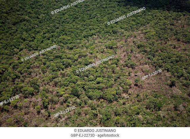 Area Florestada, Miranda, Mato Grosso do Sul, Brazil