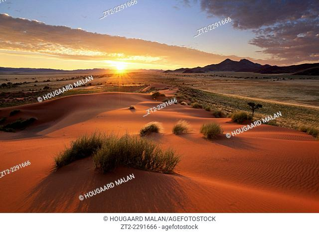Landscape photo of a colourful sunrise over a green desert landscape after plentiful rains. Namib Rand, Namibia