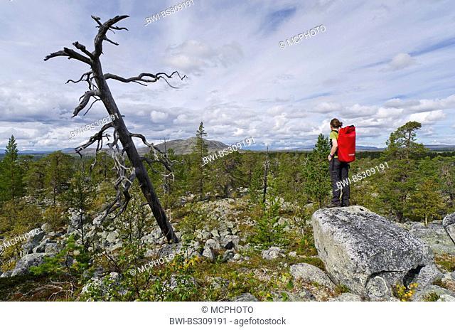 female wanderer enjoying the outlook, Sweden, Haerjedalen, Rogen Naturreservat