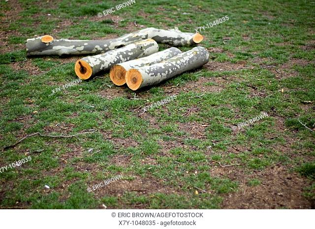 Logs cut with precision in a park