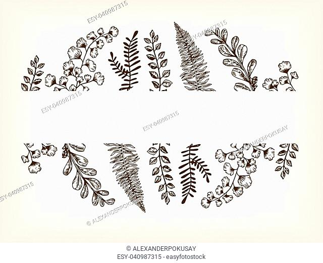 Leaves of plants engraving vector illustration. Brown aged background. Scratch board style imitation. Hand drawn image
