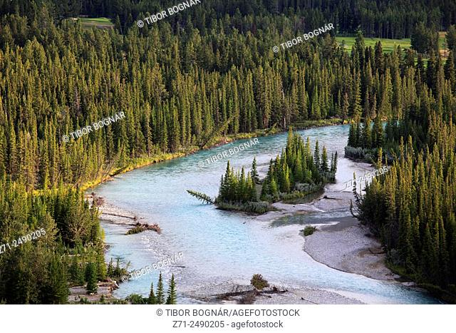 Canada, Alberta, Banff National Park, Bow River, pine forest,