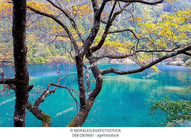 Asia, China, Sichuan province, UNESCO World Heritage Site, Jiuzhaigou National Park, Arrow Bamboo Lake