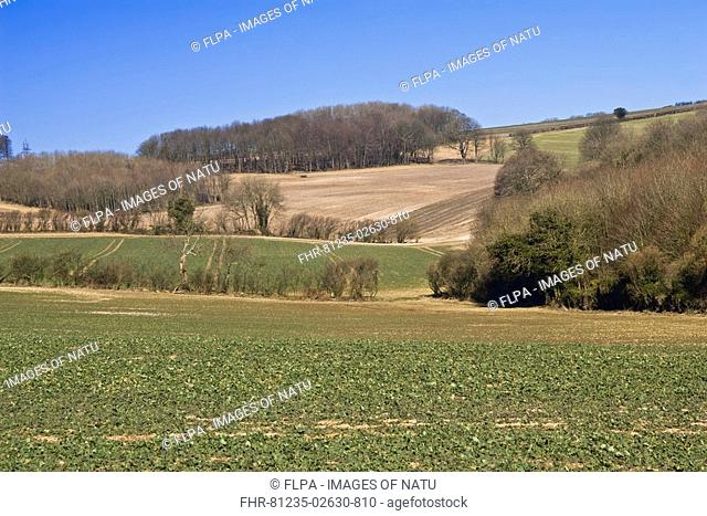 View of farmland with fields and woodland in late winter, Dorset, England, march
