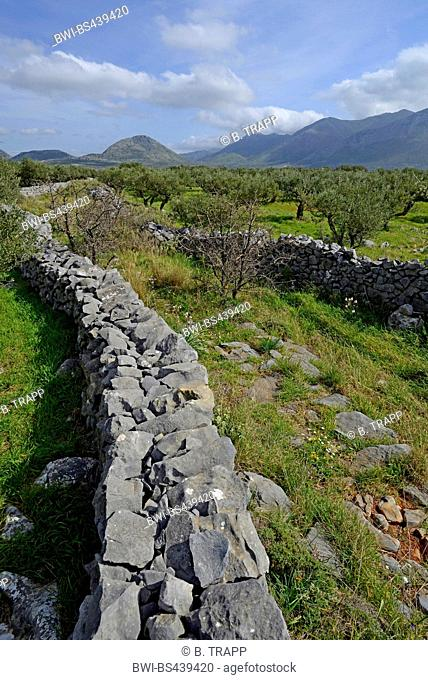 olive groves limited by stone walls, Greece, Peloponnese, Mani, Areopolis