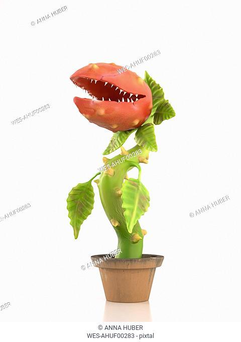 Carnivorous plant in pot