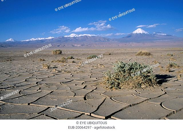 Cracked earth of desert surface near San Pedro de Atacama with snow capped peak of Volcano Lincancabur beyond