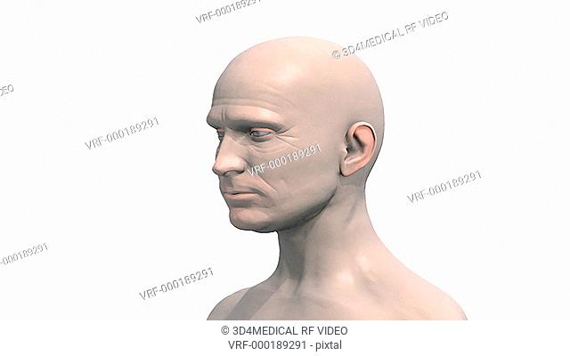 A zoom in on the head of a male which fades down revealing the brain with the left hemisphere faded down which then fully rotates in an anti-clockwise motion